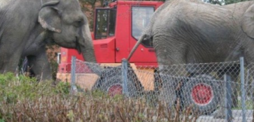Elefanter på Elmevej